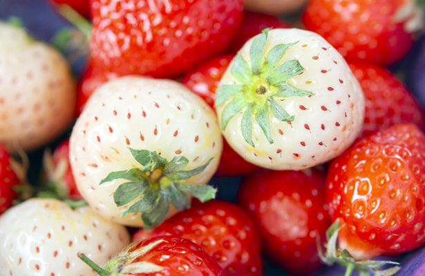 methwick-hybrid-fruits-pineberry