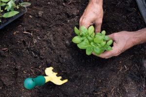 The benefits of gardening for seniors | Meth-Wick Community