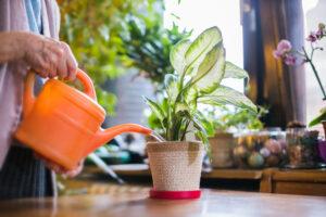 The Benefits of Houseplants   Meth-Wick Community Blog